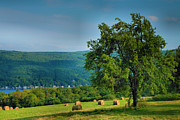 Finger Lakes Prints - Pear Tree And Hayfield Print by Steven Ainsworth