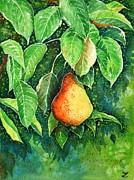Pear Tree Painting Posters - Pear Poster by Zaira Dzhaubaeva