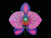 Sacred Geometry Reliefs Posters - Pearl Poster by Heather Crowther