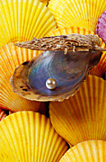 Find Prints - Pearl in oyster shell Print by Garry Gay