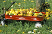 Wagon Wheels Photos - Pears in a Wagon by Gordon Wood