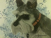 Pebbles Drawings Posters - Pebbles Miniature Schnauzer Poster by Jim Hubbard