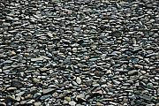 Pebbles Prints - Pebbles on the beach Print by Gene Sizemore