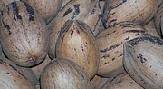 Nc Photographers Framed Prints - Pecans - Photography Framed Print by Rebecca Anne Grant