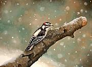 Woodpecker Paintings - Pecking Through Rain Sleet and Snow by Carole Rickards