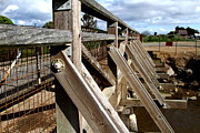 Wood Bridges Photos - Pedestrian Bridge At Point Isabel In Richmond California . 7D15084 by Wingsdomain Art and Photography