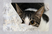 Kitties Digital Art - Peek A Boo I See You Too by Andee Photography