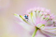 Ladybird Photos - Peek-a-Boo by Jacky Parker