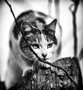 Kitty Cat Photo Prints - Peek a Boo Kitty Print by John Rizzuto