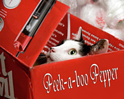 Cat Art Photos - Peek-a-boo Pepper by Andee Photography