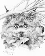 Canadian Art Drawings Drawings Posters - Peek-aboo Lynx Poster by Bob Patterson