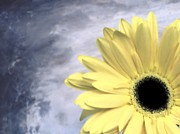 Grays Digital Art - Peekaboo Daisy by Marsha Heiken