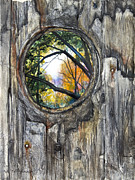 Knothole Prints - Peeky Hole Through The Fence II Print by Patricia Allingham Carlson