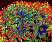 Transformed Photo Prints - Peele Mums - Digital Photo Art Print by Merton Allen
