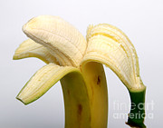 Peeled Prints - Peeled Banana Print by Photo Researchers, Inc.