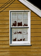 Ellicott Framed Prints - Peeling Window Framed Print by Murray Bloom