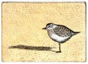 Etching Mixed Media - Peep by Charles Harden