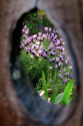 Knothole Prints - Peephole Garden Print by CML Brown