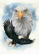 Bald Eagle Mixed Media Framed Prints - Peerless Framed Print by Barbara Keith