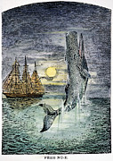 Dick Framed Prints - Pehe Nu-e: Moby Dick Framed Print by Granger