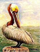 Carol Allen Anfinsen Metal Prints - Pelican at rest Metal Print by Carol Allen Anfinsen