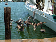 Shrimp Boat Prints - Pelican Brunch Print by LD Gonzalez