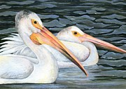 Dakota Paintings - Pelican Couple by Brandy Fenenga