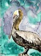 Pelican Drawings Framed Prints - Pelican Framed Print by Derek Mccrea