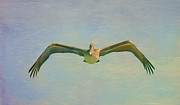 Flight Mixed Media Posters - Pelican Dreamy Feel Poster by Deborah Benoit
