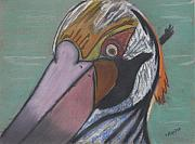 Pelican Originals - Pelican Face by Stu Hanson
