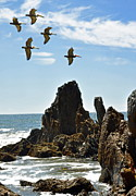 Tide Pools Posters - Pelican Inspiration Poster by Gwyn Newcombe
