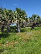 Palmetto Plants Photos - Pelican Island in Florida by Allan  Hughes