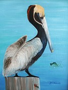 June Holwell - Pelican