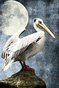 Boobies Mixed Media Metal Prints - Pelican Night Metal Print by Angela Doelling AD DESIGN Photo and PhotoArt