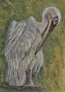 Pelican Drawings Metal Prints - Pelican Portrait Metal Print by Sarojini Muller