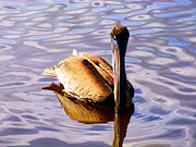 Tropical Photographs Photos - Pelican Puddles by Karen Wiles