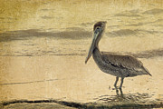 Pelican Metal Prints - Pelican Metal Print by Rebecca Cozart
