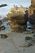 Robert Bissett - Pelican Rock