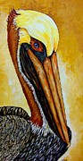 Pelican Painting Originals - Pelican by Sherry Dole
