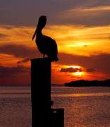 Reflections Of Sun In Water Posters - Pelican Sundown Poster by Karen Wiles
