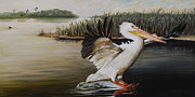 American White Pelican Painting Posters - Pelicans at the Confluence Poster by Rob Dreyer AFC