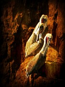 End Of The World Acrylic Prints - Pelicans Corner by Leah Moore