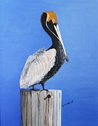June Holwell - Pelicans Lookout