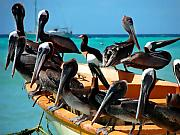 Pelican Metal Prints - Pelicans on a boat Metal Print by Bibi Romer