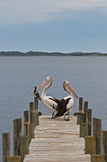 Pelicans On A Timber Landing Pier Mooring Print by Ulrich Schade