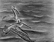 Pelican Drawings Metal Prints - Pelicans on the Chesapeake Metal Print by V E Delnore