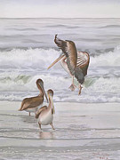 Carol Pastels - Pelicans Three Canvas Giclee Print by Carol Thompson