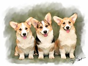 Pups Digital Art - Pembroke Corgis by Maxine Bochnia