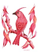 Gradient Drawings Acrylic Prints - Pen and ink drawing of Red bird Acrylic Print by Mario  Perez