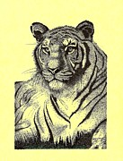 The Tiger Hunt Drawings - Pen and Ink drawing of Royal Tiger by Mario  Perez